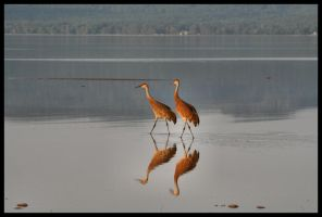 Cranes in the bay 2 by NOS2002