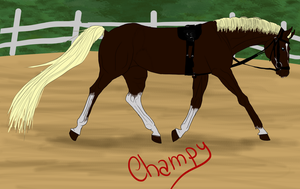 Champion's Fame RSS-Dressage training by YleniaBax