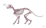 Cat Skeleton Sketch by CyndalCreates