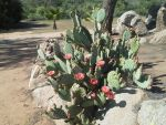 Cactus with flowers by DesiMel