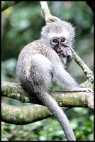 Spotted by a Monkey by mikewilson83