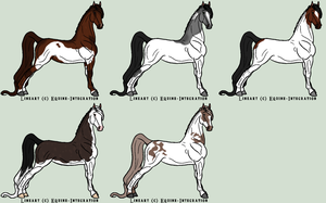 FCFS sale - natural offer adopts by RedOak-Stables