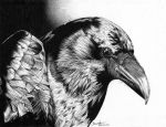Crow - Black and white by be-a-sin
