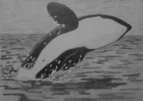 Orca Breach ATC for ~DaisyreeB by whitetippedwaves