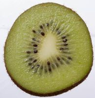 Kiwi close-up by elvaniel