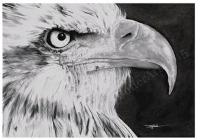 Eagle-Final by Jimtheartist