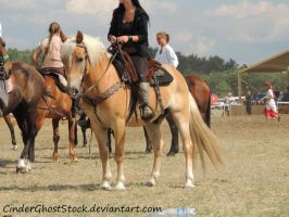 Hungarian Festival Stock 054 by CinderGhostStock