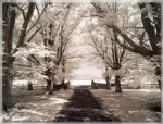 Trees Of White by JohnK222