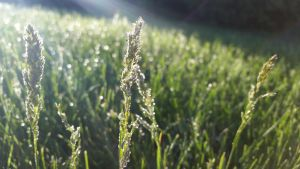 Wet Grass Seed by DaiYiCordelia