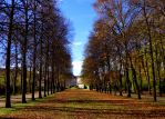 bare branched alley by Mittelfranke
