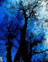 wicked trees by bosey