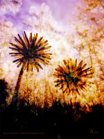 twilight soaked dandelions by ilura-menday-less