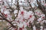 I have kissed Spring blossoms in the Summer rain by LutherHarkon
