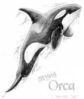 Flying Orca by SyKoticOrKa