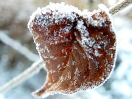 Frost by Phenri