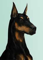 Doberman by KeyHof