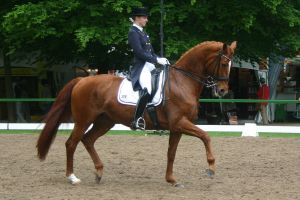 Dressage Trot Stock 08 by LuDa-Stock