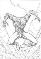 Spidey Web by RudyVasquez