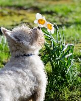 Leave time to smell the flowers by AdrianSadlier
