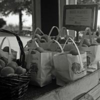 Peaches - Carters Mountain Orchard by rdungan1918