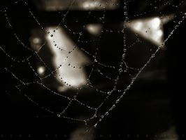 Spider Web Diamonds by SongYong