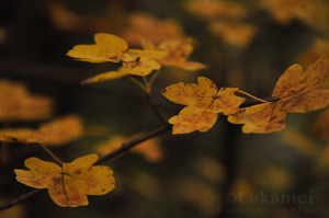 Yellow autumn by Alukei