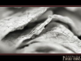 infrared flower background by parablev