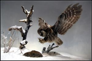 Owl Attacks by Wendonai