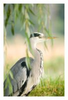 Grey Heron by Neutron2K