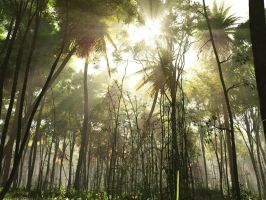 Tropical Jungle -view- by rraffy
