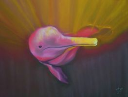 Amazon Pink River Dolphin by Pastel-Lover