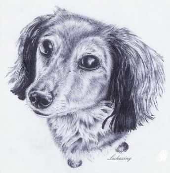 Dachshund dog by Lukasing