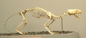 Animals - Skeleton 3 by MoonsongStock