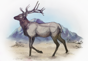 Wandering Elk by autumnicity