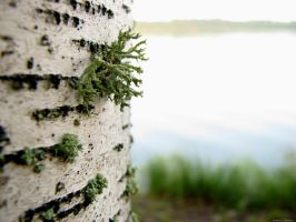 Lichen with Lake View by RobMitchem