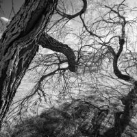The Near-sighted Dryad View by Phostructor