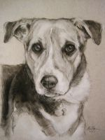 Pippin in Charcoal by Capukat