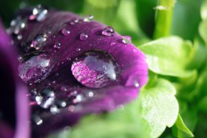 Water Droplet 5 by Takeshi-Toga