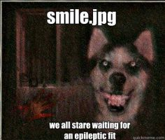 Smile dog by doggieatemyslippers