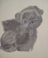 Puppy Pug by AestheticAry