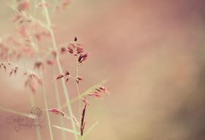 Delicate by CandiceSmithPhoto