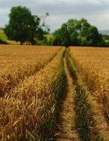 The Cotswold Way II by younghappy