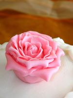 pink rose by sweetdisposition14