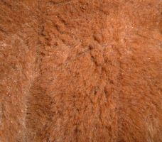 brown short fur texture by DemoncherryStock