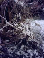 Icy Shrub by TrainOfThought96