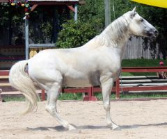 Andalusian 7 by roar-shack-stock