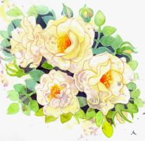 Rose study white by isletree