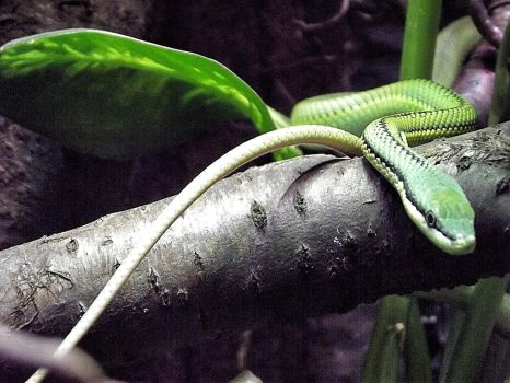 Green snake by giantrider8
