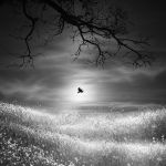 Lonely Wing by arayo