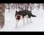 Snowfall in the Park by Wandering-Rei